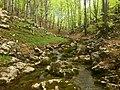 The forest above Borov kamyk waterfall, Vrachanski Balkan - spring 2012.jpg