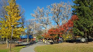 Brewer Park - Trees on the northern side of Brewer Park, Ottawa, ON - November 2016