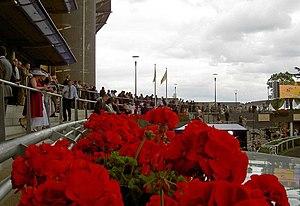 English: The winners enclosure Royal Ascot.
