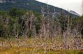 Tierra del Fuego16(js).jpg