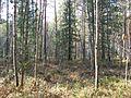 Tomsky District, Tomsk Oblast, Russia - panoramio (211).jpg