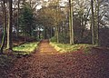 Track in the Drumlanrig Woods - geograph.org.uk - 88379.jpg