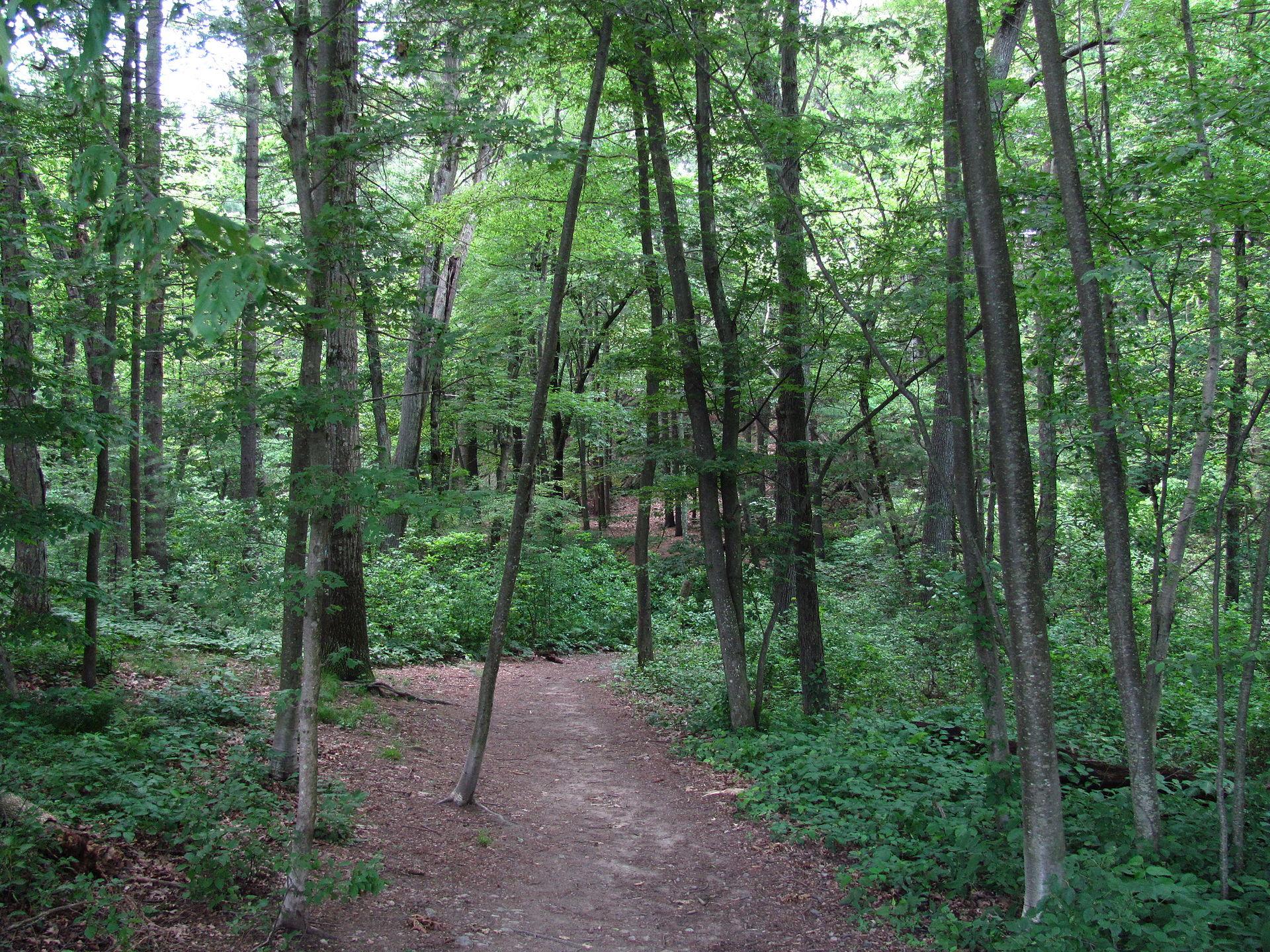 Hiking trail 2 - 5 6