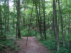 Trail leading into Wilson Mountain Reservation, Dedham MA.jpg