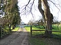 Tree-lined drive to Stonehenge Farm - geograph.org.uk - 320993.jpg