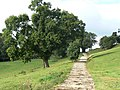 Tree lined track - geograph.org.uk - 553671.jpg