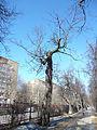 Trees in Memorial park 01.JPG