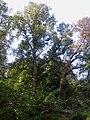Trzeszczany, park (2).jpg