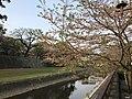 Tsuboigawa River and Long Wall of Kumamoto Castle 3.jpg