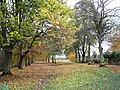 Tyne Green Country Park in Autumn - geograph.org.uk - 197860.jpg