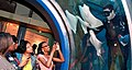 U.S. Navy Diver Feeds various Types of Marine Life In a Tank at the Audubon Aquarium New Orleans.jpg
