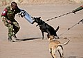 U.S. veterinarian share K-9 care techniques with BDF Military Police (7779740548).jpg