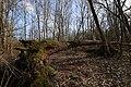Umgefallener Baum im Everstenmoor 03.jpg