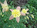 Unique flower 2.jpg