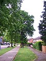 Urban Oaks - Cell Barnes Road - geograph.org.uk - 428450.jpg