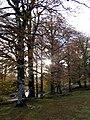 Urbasa-Andia Nature Park in Navarre 10.jpg
