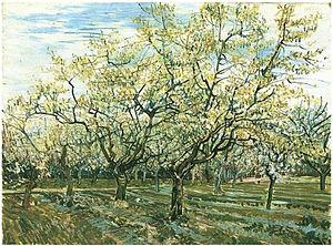 Flowering Orchards - Image: Van Gogh Obstgarten mit blühenden Pflaumenbäumen