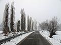 Via Molinazza - Scandiano, Reggio Emilia, Italy - January 30, 2011 03.jpg