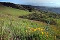 View with CA poppies - panoramio.jpg