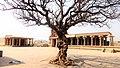 Vijaya Vittala Temple - Fossil Tree.jpg