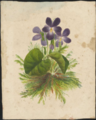 Violets and fern by Susan Fereday.png