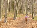 Volkspark Rehberge - Waldweg (Woodland Path) - geo.hlipp.de - 35004.jpg