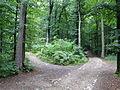 WaldwegKapuzinerbergJ01.JPG