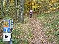 Waldweg am Langenberg (Woodland Way on Langenberg) - geo.hlipp.de - 14747.jpg