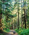 Walk in the Heritage Forest saved from developement by Qualicum Villagers donations - panoramio.jpg