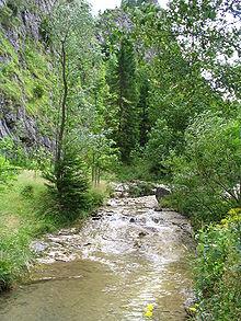 Mill Creek Ravine Dog Park
