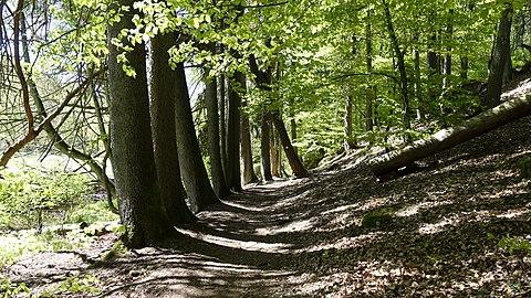 Weg entlang der Lambsbach.jpg