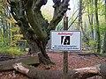Weg in den Gespensterwald.jpg