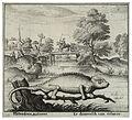 Wenceslas Hollar - The chameleon.jpg