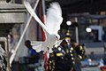 White dove (49610330116).jpg