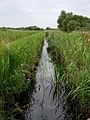 Wicken Fen - geograph.org.uk - 7246.jpg