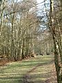 Wild deer, Berkhamsted Common - geograph.org.uk - 136358.jpg