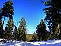 Winter forest road - panoramio.jpg