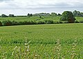 Winter wheat - geograph.org.uk - 851192.jpg