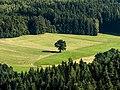 Wonsgehaig-Neubürg-P7100015.jpg