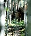 Wood-Buffalo-NP Waldbison Kalb 98-07-04.jpg