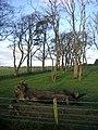 Wood at Laigh Langside - geograph.org.uk - 292504.jpg