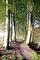 Woodland Walk on the Banks of the River North Esk near Edzell - geograph.org.uk - 1008840.jpg