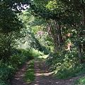 Woodland footpath south of Lawns Wood, Staffordshire - geograph.org.uk - 979650.jpg