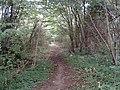 Woodland on the Cuckoo Way - geograph.org.uk - 48703.jpg