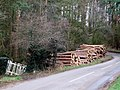 Woodpile near Great Brickhill - geograph.org.uk - 311229.jpg