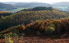 Woods near Comrie - geograph.org.uk - 1573712.jpg