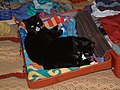 Wraxall MMB 06 Smudge and Whisky.jpg