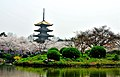 Wuhan east lake sakura garden.jpg