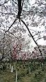 Xiangcheng, Suzhou, Jiangsu, China - panoramio (77).jpg