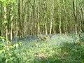 Yellowcoat Wood - geograph.org.uk - 108377.jpg